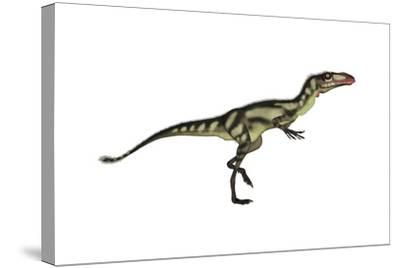 Dilong Dinosaur-Stocktrek Images-Stretched Canvas Print