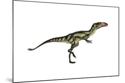 Dilong Dinosaur-Stocktrek Images-Mounted Art Print