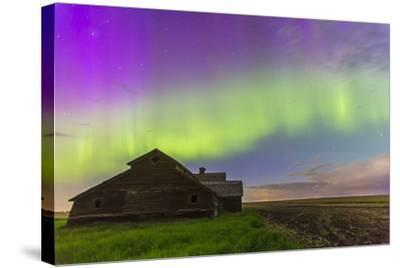 Purple Aurora over an Old Barn in Southern Alberta, Canada-Stocktrek Images-Stretched Canvas Print