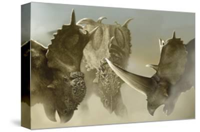 A Group of Pachyrhinosaurus Dinosaurs-Stocktrek Images-Stretched Canvas Print