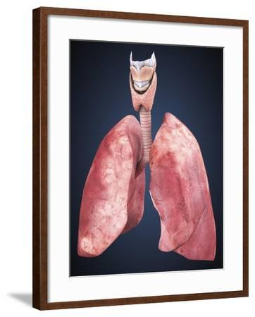Three Dimensional View of Human Lungs-Stocktrek Images-Framed Art Print