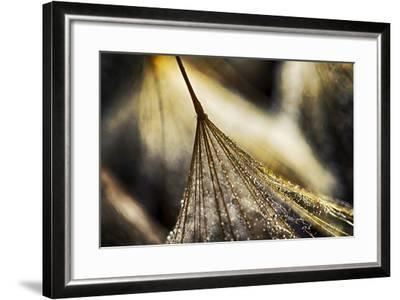 Dancing in the Golden Hour-Ursula Abresch-Framed Photographic Print