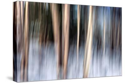 Birchbank in Winter-Ursula Abresch-Stretched Canvas Print