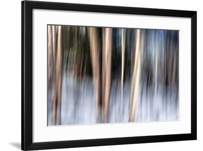 Birchbank in Winter-Ursula Abresch-Framed Photographic Print