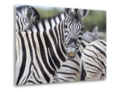 Africa, Namibia, Etosha National Park. Zebra Looking at Camera-Jaynes Gallery-Metal Print