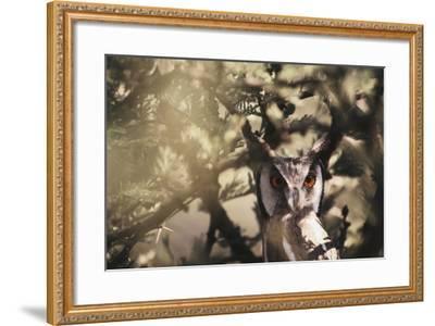 Southern Africa, Botswana, Spotted Eagle Owl, Bubo Africanus-Stuart Westmorland-Framed Photographic Print