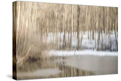 Multiple Exposure of Trees in Winter, Eagle Creek Park, Indiana-Rona Schwarz-Stretched Canvas Print