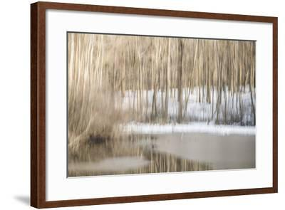 Multiple Exposure of Trees in Winter, Eagle Creek Park, Indiana-Rona Schwarz-Framed Photographic Print