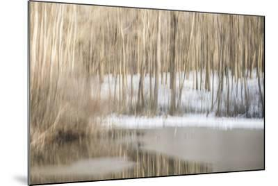 Multiple Exposure of Trees in Winter, Eagle Creek Park, Indiana-Rona Schwarz-Mounted Photographic Print