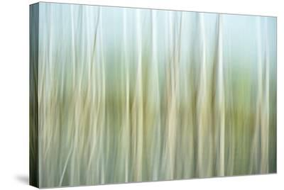 Nature Abstract, Celery Bog Wetlands, West Lafayette, Indiana-Rona Schwarz-Stretched Canvas Print