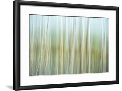 Nature Abstract, Celery Bog Wetlands, West Lafayette, Indiana-Rona Schwarz-Framed Photographic Print