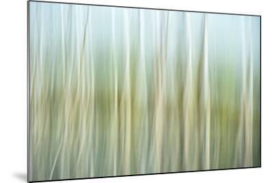 Nature Abstract, Celery Bog Wetlands, West Lafayette, Indiana-Rona Schwarz-Mounted Photographic Print