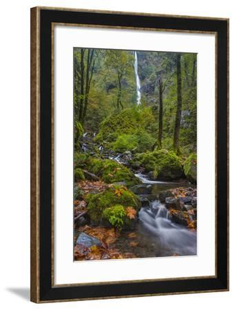 Fall Color Along Starvation Creek Falls, Columbia Gorge, Oregon-Chuck Haney-Framed Photographic Print