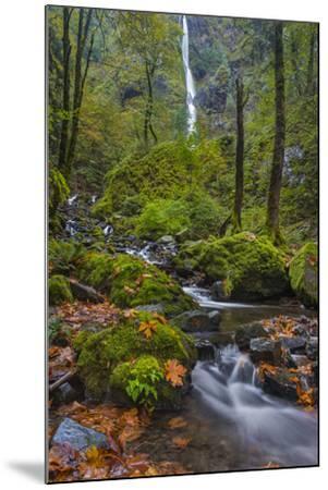 Fall Color Along Starvation Creek Falls, Columbia Gorge, Oregon-Chuck Haney-Mounted Photographic Print