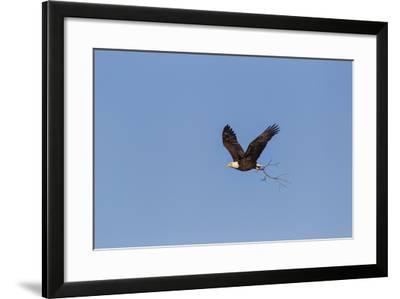 Bald Eagles In The Highland Lakes