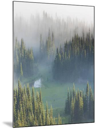 Washington, Mount Rainier National Park. Overview of Surprise Lake-Jaynes Gallery-Mounted Photographic Print