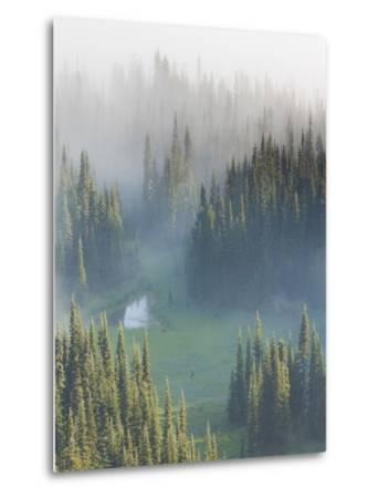 Washington, Mount Rainier National Park. Overview of Surprise Lake-Jaynes Gallery-Metal Print