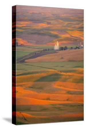 Summer Wheat, Barley and Lentil Fields, Washington, Palouse Area-Stuart Westmorland-Stretched Canvas Print