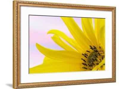 Washington. Detail of Sunflower Blossom-Jaynes Gallery-Framed Photographic Print