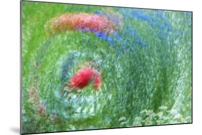 USA, Washington, Whidbey Island. Montage of Flowers and Greenery-Jaynes Gallery-Mounted Photographic Print