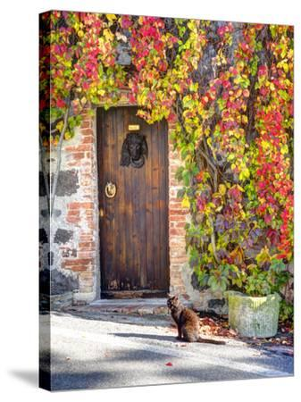 Italy, Tuscany, Contignano. a Wooden Door Surrounded by Fall and Cat-Julie Eggers-Stretched Canvas Print