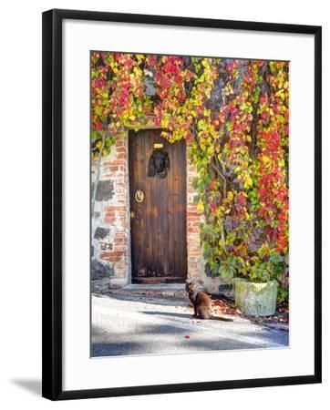 Italy, Tuscany, Contignano. a Wooden Door Surrounded by Fall and Cat-Julie Eggers-Framed Photographic Print