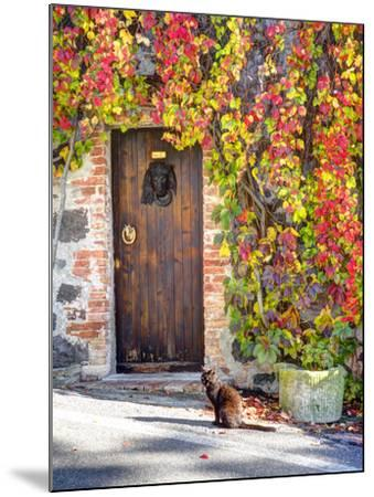 Italy, Tuscany, Contignano. a Wooden Door Surrounded by Fall and Cat-Julie Eggers-Mounted Photographic Print