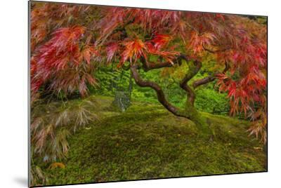 Japanese Maple Tree in Autumn, Japanese Gardens, Portland, Oregon-Chuck Haney-Mounted Photographic Print