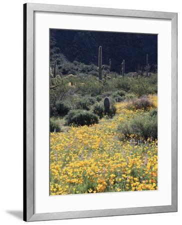 Organ Pipe Cactus Nm, California Poppy and Saguaro in the Ajo Mts-Christopher Talbot Frank-Framed Photographic Print