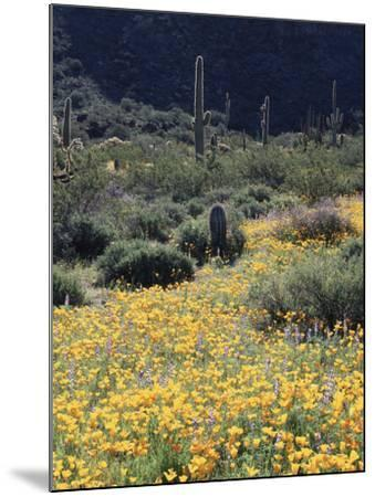 Organ Pipe Cactus Nm, California Poppy and Saguaro in the Ajo Mts-Christopher Talbot Frank-Mounted Photographic Print
