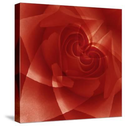 USA, Colorado, Lafayette. Red Rose Montage-Jaynes Gallery-Stretched Canvas Print