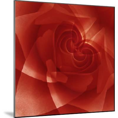 USA, Colorado, Lafayette. Red Rose Montage-Jaynes Gallery-Mounted Photographic Print