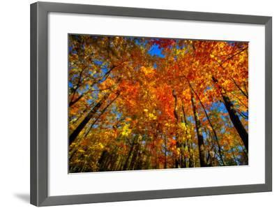 USA, West Lafayette, Indiana, Trees at the Celery Bog in Autumn-Rona Schwarz-Framed Photographic Print