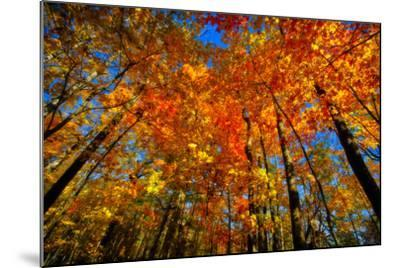 USA, West Lafayette, Indiana, Trees at the Celery Bog in Autumn-Rona Schwarz-Mounted Photographic Print