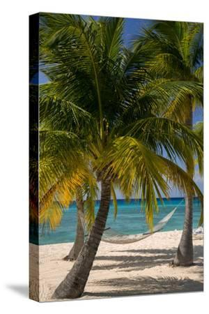 Palm Trees and Hammock at Seven Mile Beach, Grand Cayman, West Indies-Brian Jannsen-Stretched Canvas Print