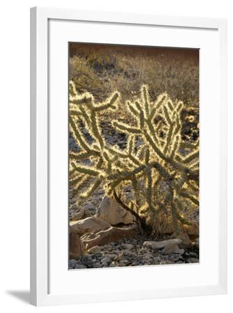 Arizona, Organ Pipe Cactus Nm. Chain Fruit Cholla Showing Spines-Kevin Oke-Framed Photographic Print