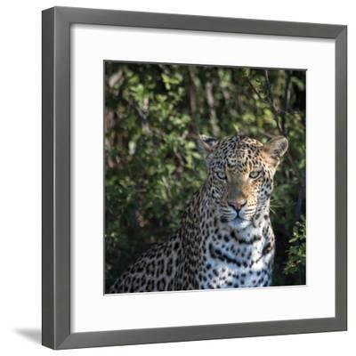 Leopard Portrait, Close Up-Sheila Haddad-Framed Photographic Print