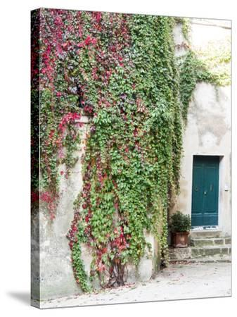 Italy, Tuscany, Monticchiello. Red Ivy Covering the Walls of Buildings-Julie Eggers-Stretched Canvas Print