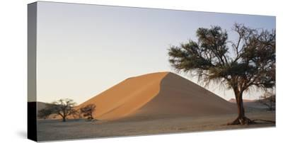 Namibia, Namib Naukluft National Park, Acacia Tree and Red Sand Dunes, Sossusvlei-Paul Souders-Stretched Canvas Print