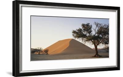 Namibia, Namib Naukluft National Park, Acacia Tree and Red Sand Dunes, Sossusvlei-Paul Souders-Framed Photographic Print