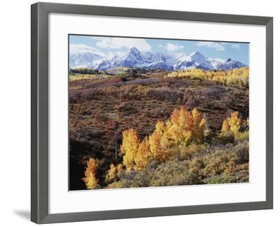 Colorado, San Juan Mountains, Autumn Colors of Aspen at Dallas Divide-Christopher Talbot Frank-Framed Photographic Print