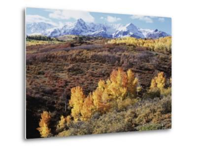 Colorado, San Juan Mountains, Autumn Colors of Aspen at Dallas Divide-Christopher Talbot Frank-Metal Print