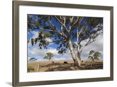Australia, Fleurieu Peninsula, Normanville, Field with Cows-Walter Bibikow-Framed Photographic Print