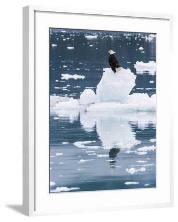 Alaska, Glacier Bay National Park. Bald Eagle on Iceberg-Jaynes Gallery-Framed Photographic Print