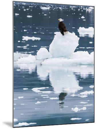 Alaska, Glacier Bay National Park. Bald Eagle on Iceberg-Jaynes Gallery-Mounted Photographic Print