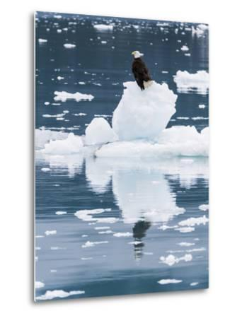 Alaska, Glacier Bay National Park. Bald Eagle on Iceberg-Jaynes Gallery-Metal Print