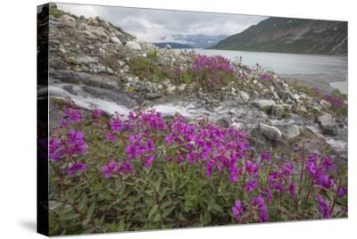 Alaska, Glacier Bay National Park. Small Stream Cascade-Jaynes Gallery-Stretched Canvas Print