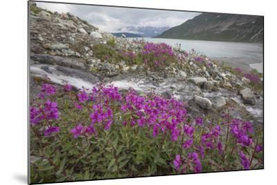 Alaska, Glacier Bay National Park. Small Stream Cascade-Jaynes Gallery-Mounted Photographic Print