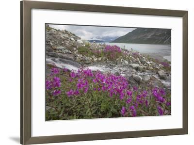 Alaska, Glacier Bay National Park. Small Stream Cascade-Jaynes Gallery-Framed Photographic Print