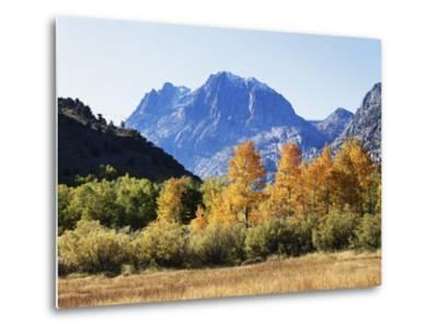California, Sierra Nevada, Inyo Nf, Fall Colors of Aspen Trees-Christopher Talbot Frank-Metal Print